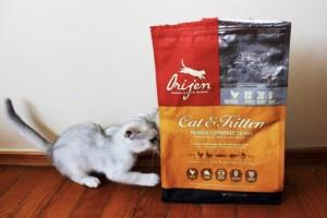 Почему стоит выбирать корма для кошек и собак Orijen